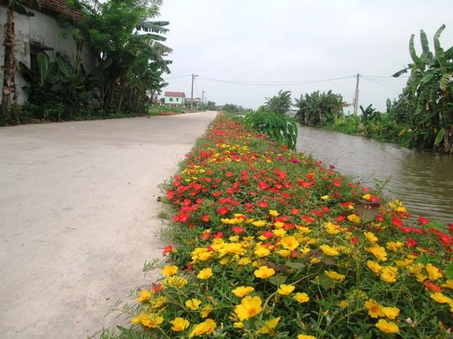 Ở huyện Hải Hậu, phong trào trồng hoa mười giờ ở các tuyến đường bê tông không chỉ riêng mình xã Hải Lộc mà còn rất nhiều các xã khác