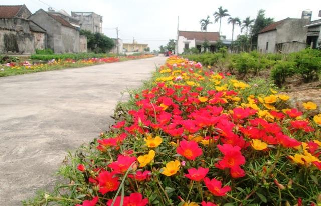 Đẹp ngỡ ngàng những con đường làng rực rỡ hoa mười giờ - 11