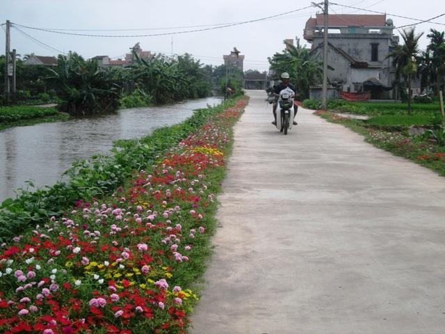 Đẹp ngỡ ngàng những con đường làng rực rỡ hoa mười giờ - 14
