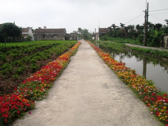 Con đường hoa mười giờ rực rỡ sắc màu ở xóm 11 xã Hải Lộc khiến nhiều người ngợp mắt