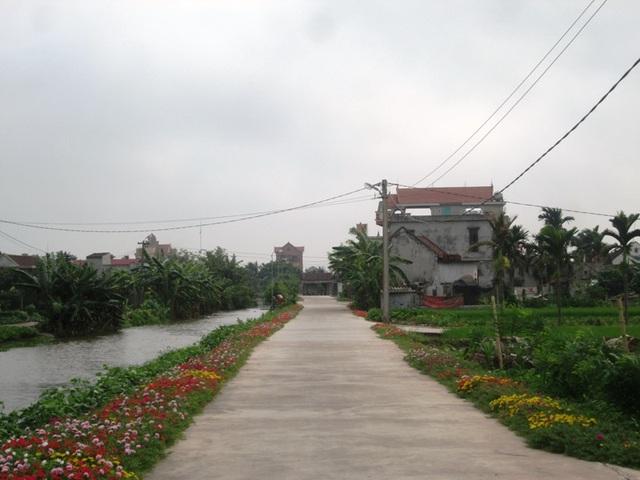 Con đường hoa mười giờ trải dài trên khắp các tuyến đường bê tông hóa ở xã Hải Lộc