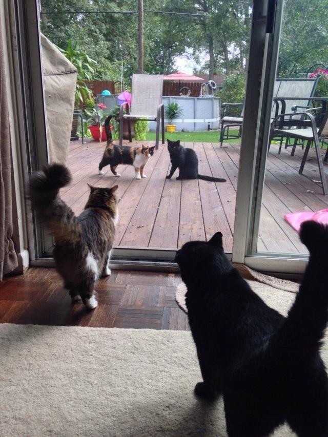 Chắc hai con mèo này nghĩ mình đang soi gương …