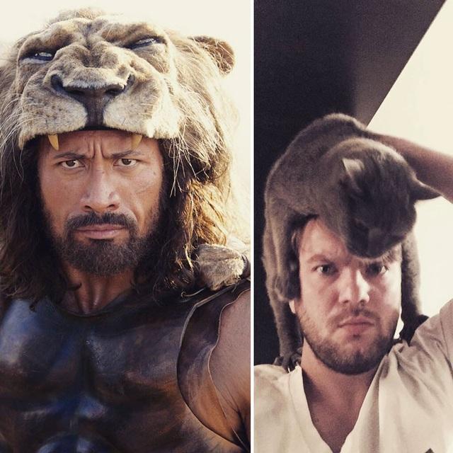 Mèo hay sư tử thì cũng có họ hàng với nhau cả!