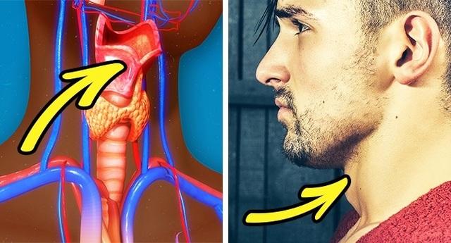 Giải mã những hiện tượng kỳ lạ xảy ra với cơ thể đàn ông - 5