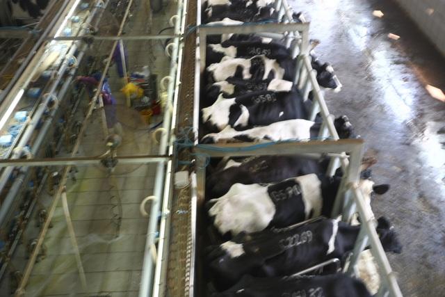 Từ nguồn sữa tươi của trang trại TH, tập đoàn TH cho ra mắt 55 sản phẩm sữa