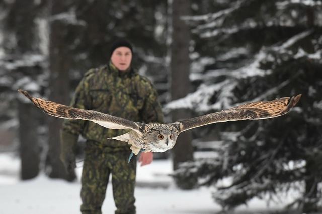Chim săn mồi được Điện Kremlin chăm sóc sức khỏe định kỳ để kéo dài thời gian làm việc (Ảnh: Sputnik)
