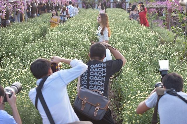 Những ngày này ở các vườn hoa ngoại thành rộn rịp bạn trẻ tới chụp ảnh, ngắm hoa cúc hoạ mi.