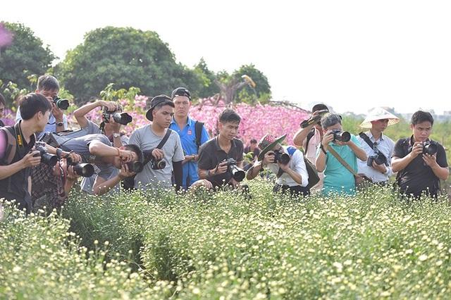 Dàn ống kính máy ảnh tụ tập tại vườn cúc hoạ mi