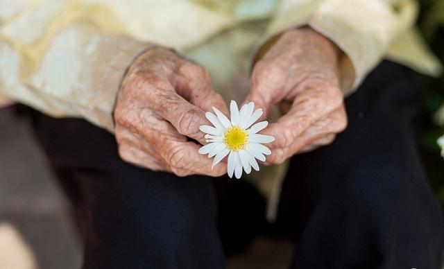 Xúc động bộ ảnh bà ngoại 99 tuổi bên cúc họa mi - 3