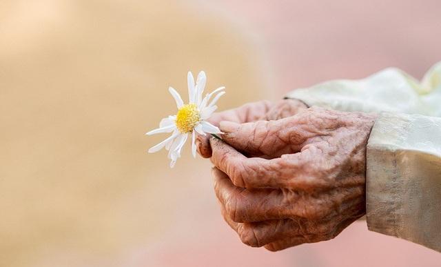 Xúc động bộ ảnh bà ngoại 99 tuổi bên cúc họa mi - 11