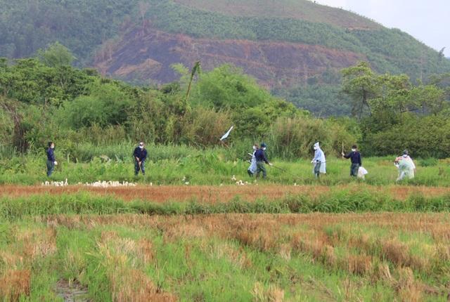 Lực lượng chức năng đang tiến hành thu gom số gia cầm nhiễm bệnh để tiêu hủy