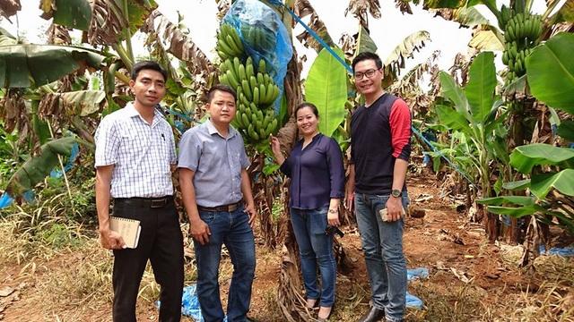 Đoàn Hội liên hiệp Thanh niên Việt Nam tỉnh Đồng Nai cùng các doanh nghiệp đi khảo sát vườn chuối (ảnh: NTK)