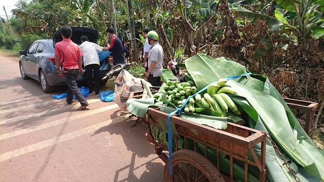 Đánh xe hơi tới tận vườn mua chuối ủng hộ bà con (ảnh: NTK)