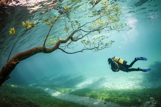 Hàng cây cũng chìm trong biển nước