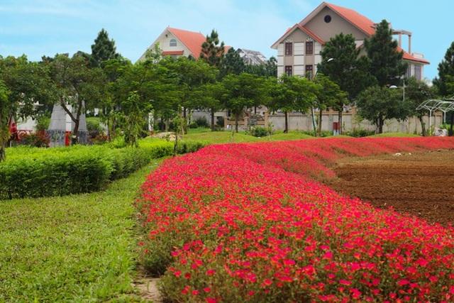 Những căn biệt thự tân cổ điển ẩn sau hàng thông xanh và vườn hoa thắm sắc chính là hình ảnh của The Phoenix Garden – Đà Lạt trong lòng Hà Nội