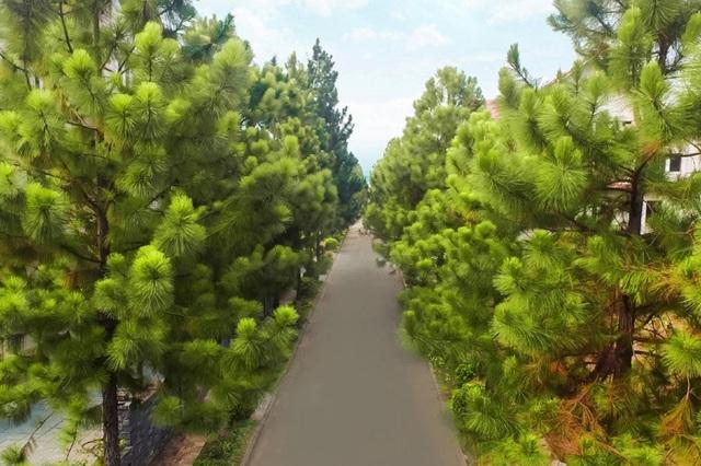 Đường nội bộ được bao quanh bởi hàng thông xanh reo vi vu trong gió