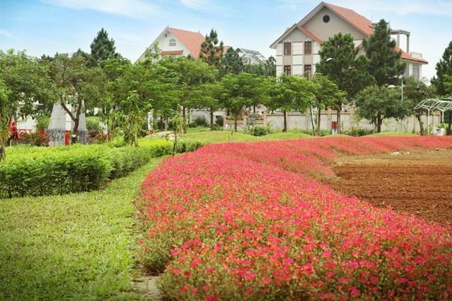 Dễ dàng bắt gặp những vườn hoa thắm sắc trong khuôn viên của The Phoenix Garden