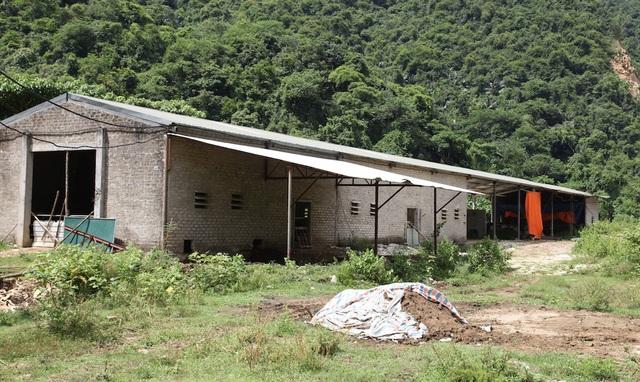 Xưởng xẻ đá của Công ty CP đá và khoáng sản Phủ Quỳ nay thành nơi nuôi bò.