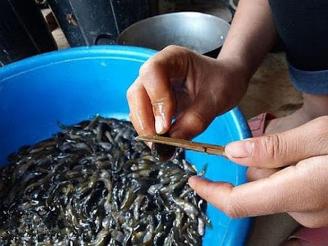 Nòng nọc rất được ưa chuộng vì hương vị thơm ngon và bổ. (Ảnh: dammedulich365)