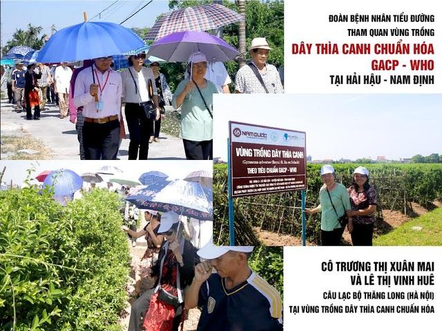 Người tiểu đường tận tay kiểm chứng vùng trồng Dây thìa canh chuẩn tại Hải Hậu – Nam Định