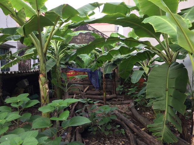 Đất thổ cư tại Long Biên đang được nhiều người lùng mua