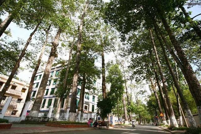 Trà Vinh đón du khách bằng con đường thẳng tắp với những hàng cây như người khổng lồ. (Ảnh: Danviet)