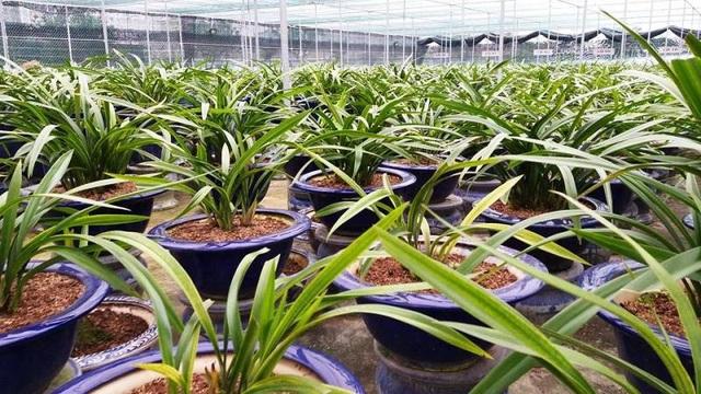 """Vườn địa lan Hoàng Vũ """"khổng lồ"""" trị giá hơn 15 tỷ đồng trên đất Thành Nam - 1"""