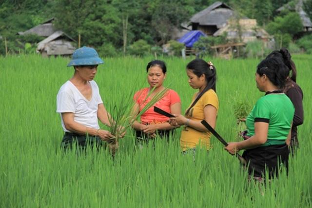Thượng uý Vũ Xuân Thu hướng dẫn bà con cách chăm sóc lúa