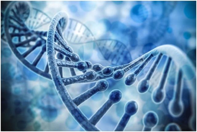 Phát hiện gen gây đột tử ở người trẻ tuổi - 1