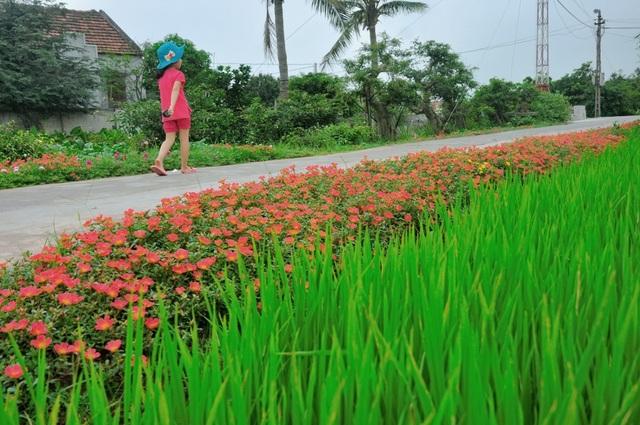 Vẻ yên bình của những con đường phủ sắc hoa mười giờ