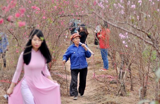Nhiều bạn trẻ tranh thủ lưu lại những khoảnh khắc đẹp bên những vườn đào bung nở sớm.