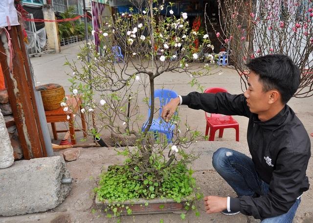 Anh Phan Thanh Hà (chủ cửa hàng bán hoa chợ Quảng An) cho biết, vài năm gần đây thú chơi đào muộn ở Hà Nội được nhiều người ưa chuộng vì thế thị trường bán đào, lê rừng sau Tết vẫn khá sôi động. Từ mùng 4 Tết cửa hàng anh Hà đã nhập đào và lê rừng về bán phục vụ nhu cầu người dân.
