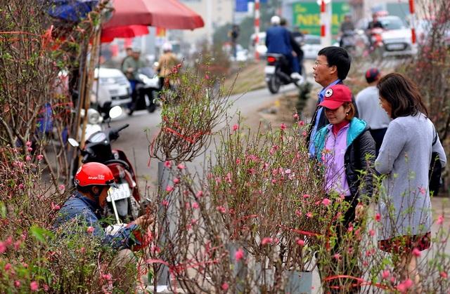 Đào rừng chủ yếu được các lái buôn đặt mua từ các tỉnh miền núi phía Bắc như Cao Bằng, Yên Bái và Lạng Sơn. Trong khi đó, một số vườn đào Nhật Tân nở muộn cũng được các chủ vườn cắt mang ra bán cùng.