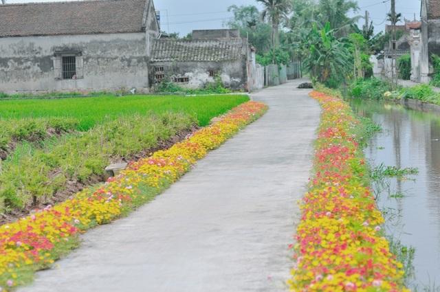 Những con đường dẫn về các thôn xóm, ngõ nhỏ phủ kín sắc hoa mười giờ