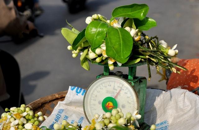 Hoa bưởi đẹp là những chùm hoa phải nở đều, cánh to, nhị vàng và có có màu trắng tinh khiết. Không giống như những loài hoa khác, hoa bưởi chỉ chơi được từ 1- 2 ngày là hết hương hoặc rụng cánh phải thay hoa mới.