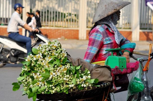 Thông thường, hoa bưởi nở vào đầu tháng 3 và chỉ nở từ 3 – 4 tuần rồi đậu trái. Các chủ vườn không cắt hoa từ những cây dùng để ăn trái mà chỉ hái từ những cây triết cành.