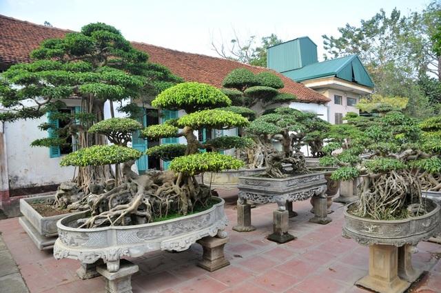 Ngoài ra, trong vườn nhà ông Ngọ còn có hàng chục các cây cảnh có tuổi đời lâu năm được đặt xen kẽ, có giá lên tới hàng tỷ đồng.