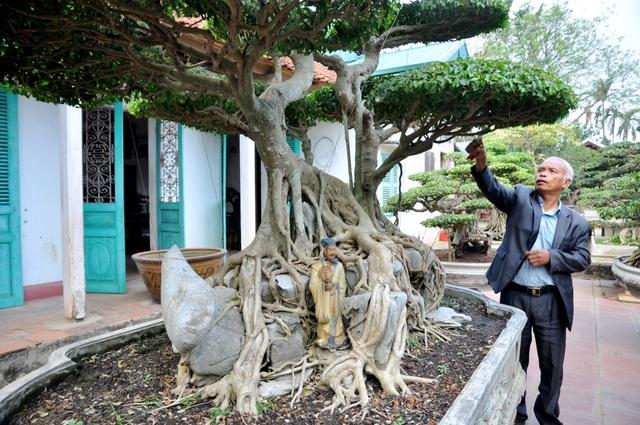 """Cây có chiều cao gần 2m, gồm 10 tán xòe rộng từ cao xuống thấp. Gốc và thân cây nằm trên khối đá nhỏ kiến tạo hình rùa. Theo ông Ngọ cây hội tụ đủ 4 yếu tố """"cổ - kỳ - mỹ - văn"""" của một cây cảnh đẹp. Đặc biệt, cây gây ấn tượng bởi bộ rễ tự nhiên, mọc thành từng chùm bao quanh khối đá mà không qua sự can thiệp của con người."""
