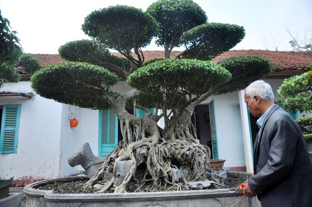 """Cây sanh có dáng """"song long thập toàn"""" với tuổi đời lên tới hơn 100 năm tuổi, có giá vào khoảng 3 tỷ đồng. Đây là một trong những cây được ông Ngọ coi là bảo bối trong vườn nhà mình."""