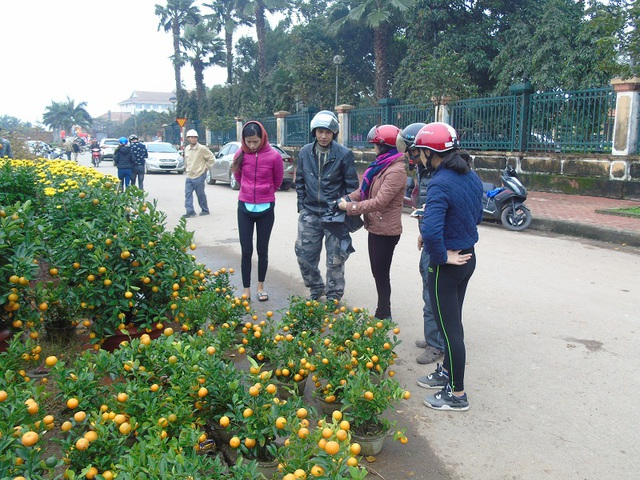 Quất tại Quảng Bình có giá từ 200 ngàn đến 1 triệu đồng, những cây thế đệp sẽ có giá cao hơn