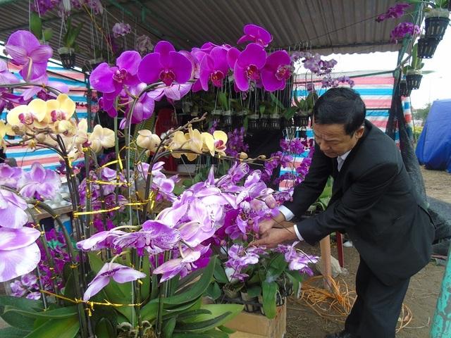 Những chậu lan hoa lan được trang trí bắt mắt