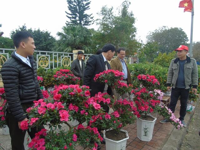 Một hàng hoa đỗ quyên thu hút người dân