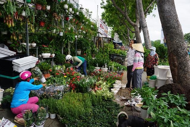 Nhiều người ghé tiệm hoa để mua hoa với giá giảm phân nửa.
