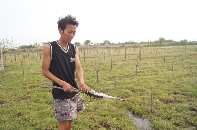Người dân lao đao vì cây chết, nước không dùng được