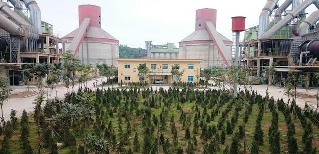 Cây xanh đã được trồng phía trong khuôn viên nhà máy xanh tốt.