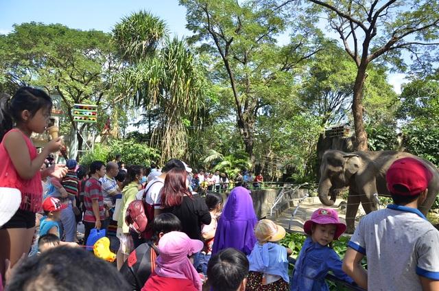 Các em nhỏ tập trung rất đông ở chuồng voi để được tận mắt nhìn thấy các chú voi thật