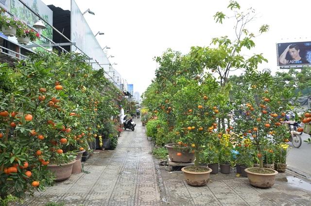 Quýt hồng trồng chậu được bày bán trên vỉa hè ở TPHCM