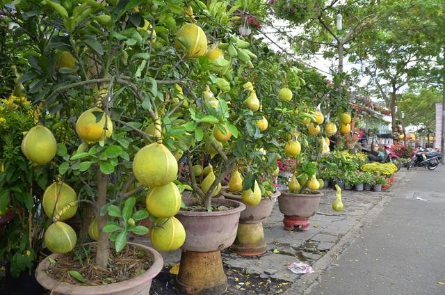 Bưởi kiểng trồng chậu cũng được bày bán khá nhiều trên đường