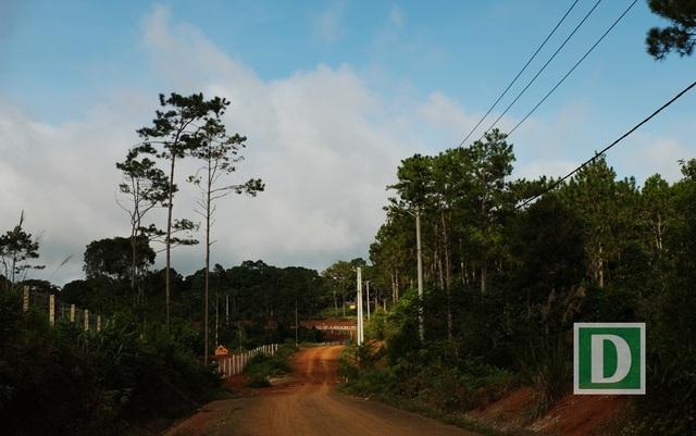Những đường đất đỏ, hai bên là rừng xanh dẫn lối du khách khám phá Măng Đen