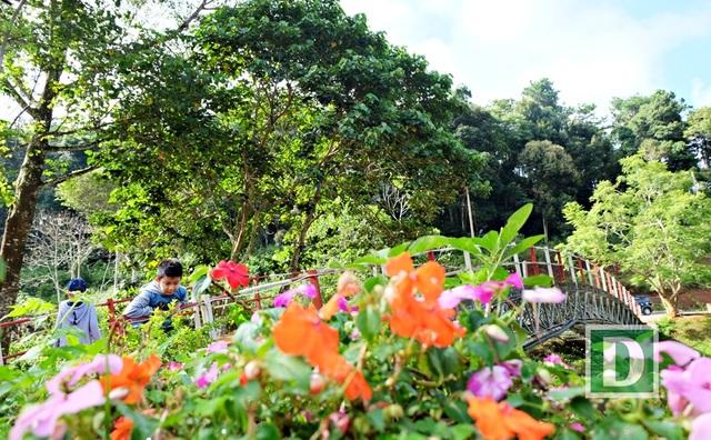 Là một vùng khí hậu mát mẻ, Măng Đen không chỉ là nơi rừng xanh, hoa thắm.